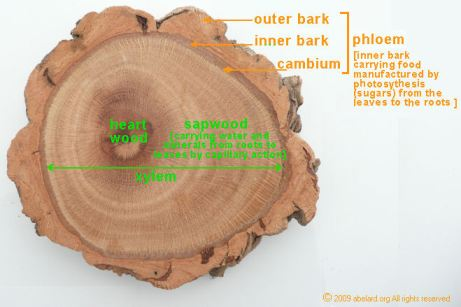 cork_cross_section