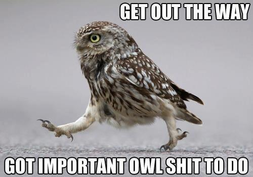 owl shit