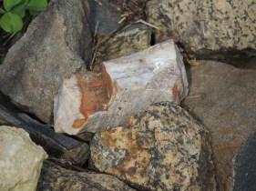 Granite rocks on the base of each vines.