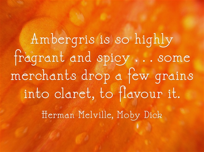 Ambergris-is-so-highly