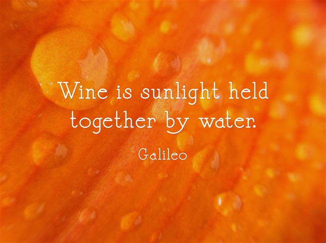 Wine-is-sunlight-held
